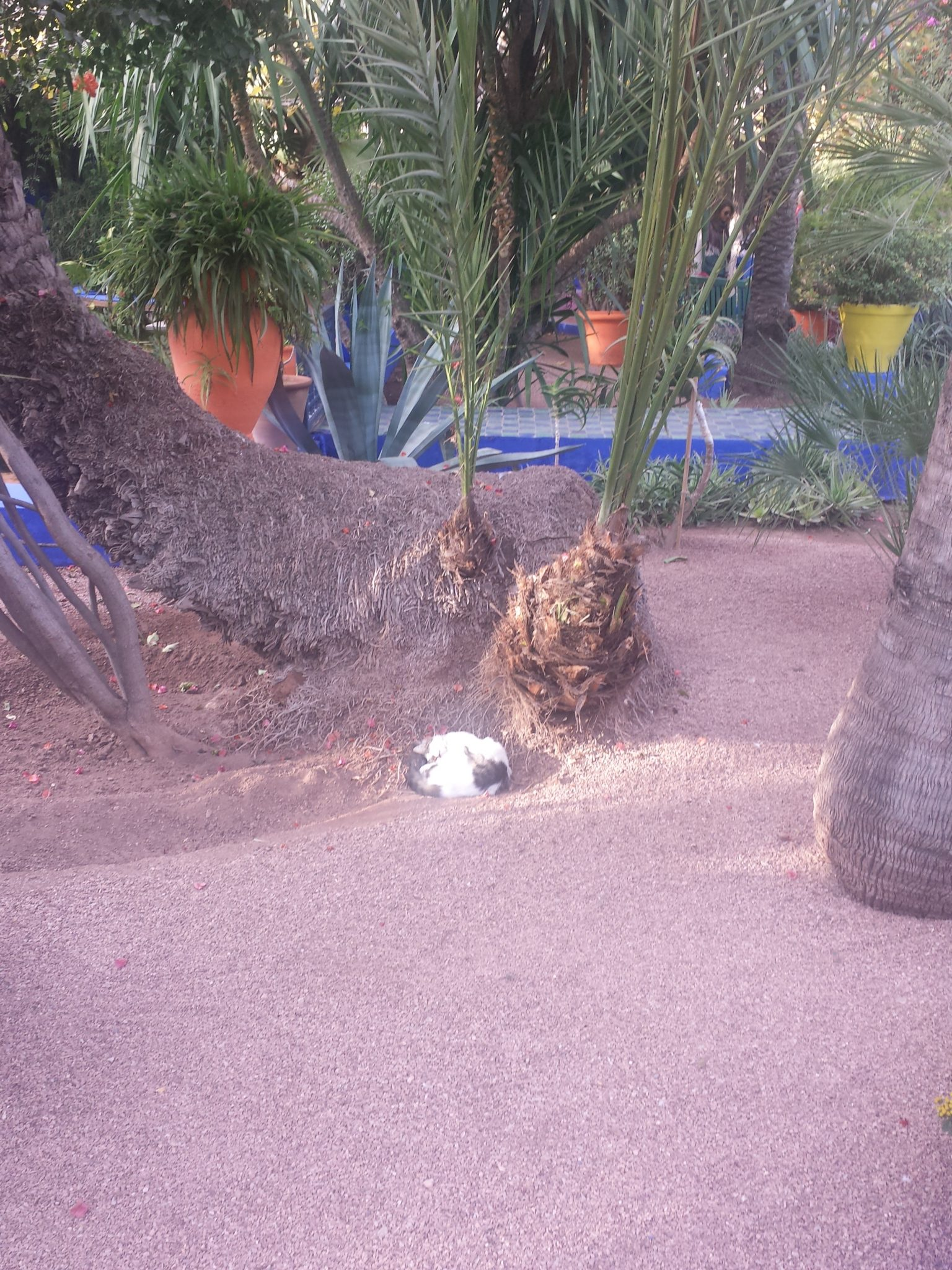 Chat Jardin Majorelle, Marrackech